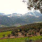¿Que hago en el campo? Ayuda para novatos en turismo rural
