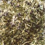 El Olivo II