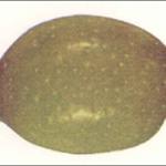 El Olivo III