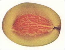 aspecto interno de la aceituna