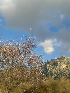 Primavera en Molino Jabonero