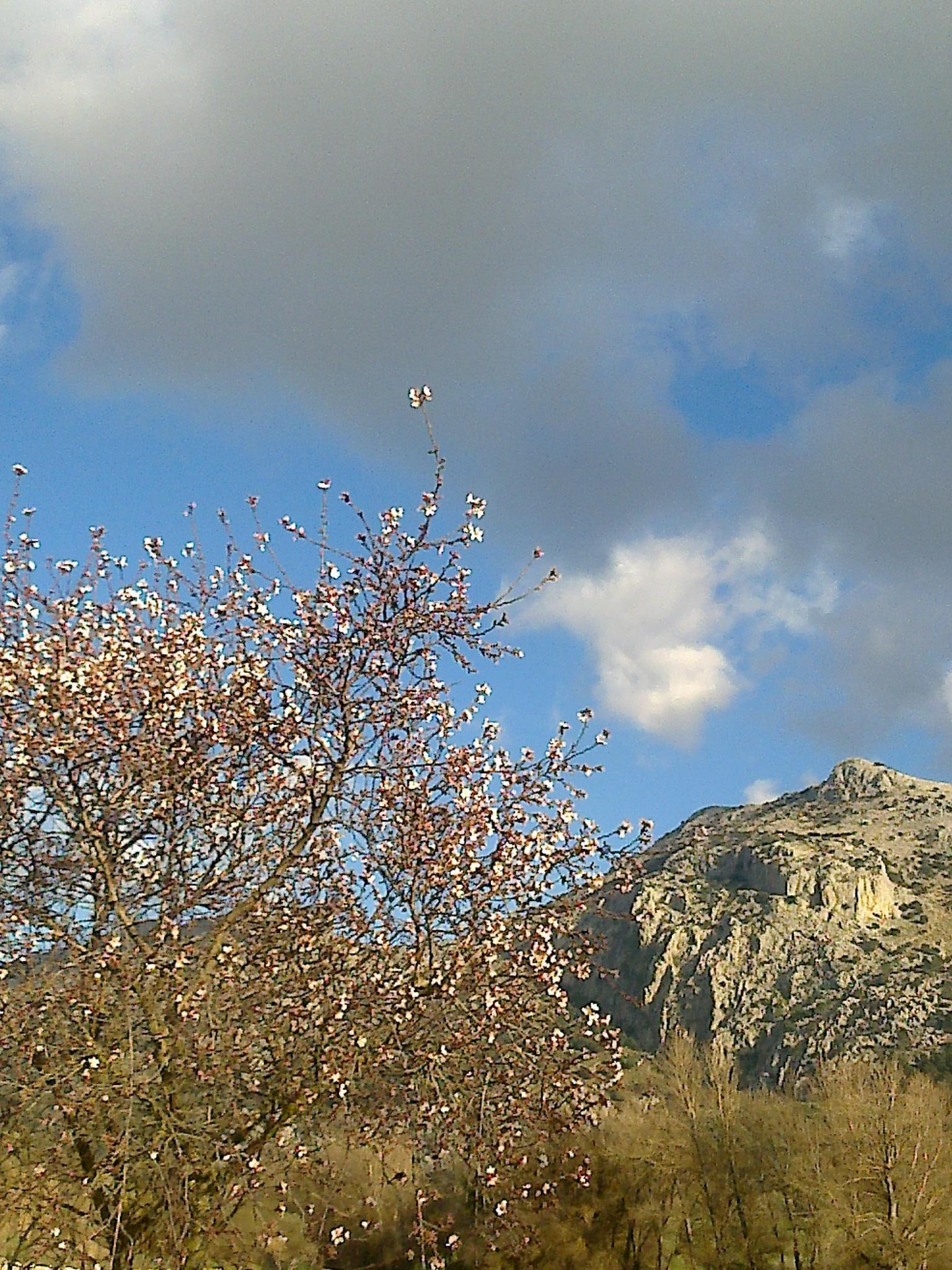 https://www.molinojabonero.com/wp-content/uploads/2014/02/molino_jabonero_febrero1.jpg