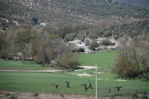 Molino Jabonero entre olivos