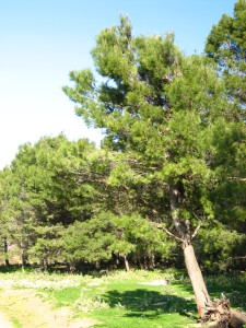 Una maravilla de la naturaleza en Málaga