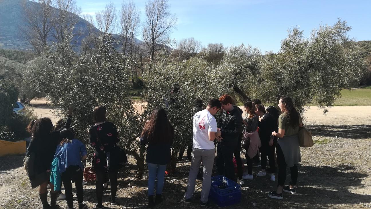 Desmontando los mitos más comunes del aceite de oliva virgen extra (II)